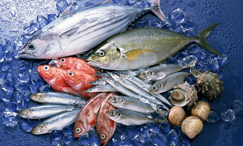 摂取 生 量 類 魚介 魚を食べると健康に良いと言われる、その訳は?